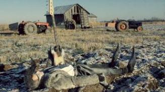 Obrázok k filmu LENINGRADSKÍ KOVBOJI DOBÝVAJÚ AMERIKU (1989)